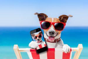 Easter-Selfie-bration-selfie-dog-dt-s_41238807