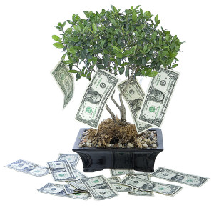 money-tree-ca-30745823-copy-300x291