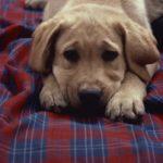 dog-blanket-201x300