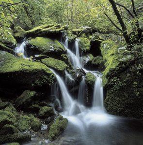 waterfall-divine-order-ca23705657-web
