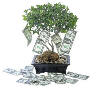 money-tree-ca-30745823-copy-300x291