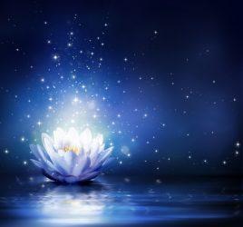 Lotus-blue-Ash Wednesday-DT_42799824