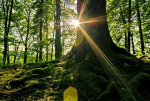 Roots-InnerStrength-sxc