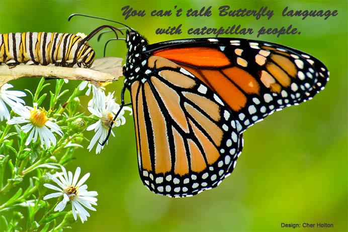 Poster-Butterfly-language-web